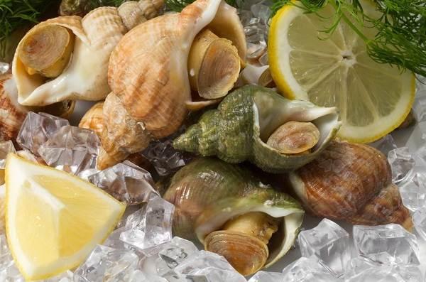 Трубач-моллюск-Описание-особенности-виды-фото-и-среда-обитания-трубача-5