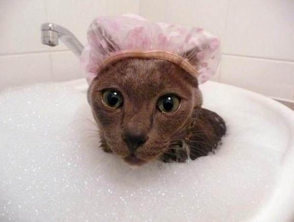 Как-помыть-кота-в-домашних-условиях-3