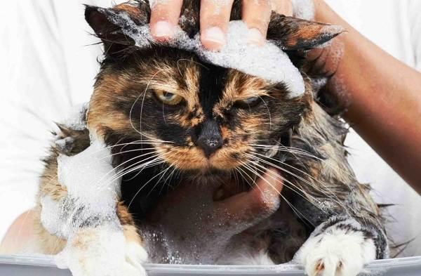 Как-помыть-кота-в-домашних-условиях-4