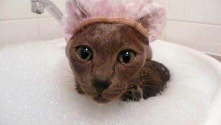 Как помыть кота в домашних условиях?