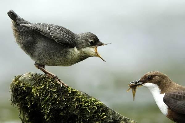 пка-её-особенности-образ-жизни-и-среда-обитания-4