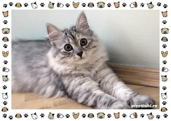 Турецкая-ангора-кошка-Описание-особенности-уход-фото-и-цена-породы-13