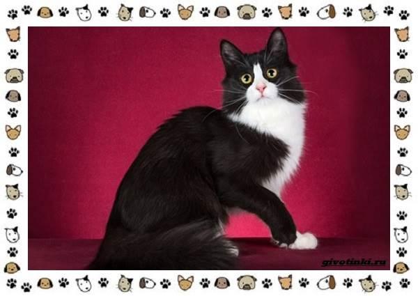 Турецкая-ангора-кошка-Описание-особенности-уход-фото-и-цена-породы-8