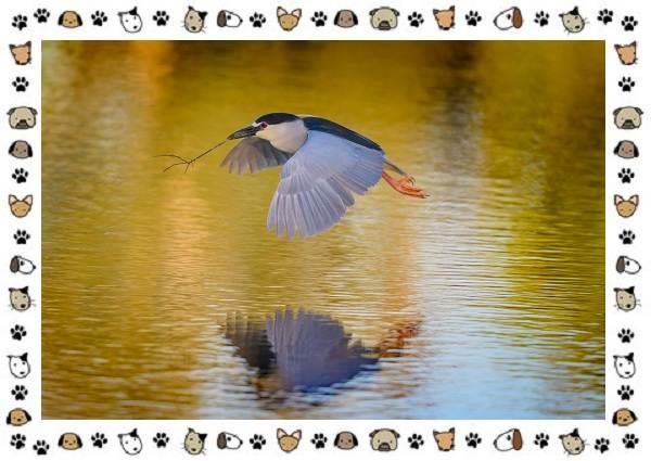 Кваква-птица-Описание-особенности-виды-и-образ-жизни-14