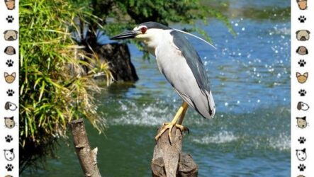 Кваква птица. Описание, особенности, виды и образ жизни