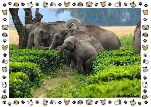 Виды-слонов-их-особенности-образ-жизни-и-среда-обитания-10-1