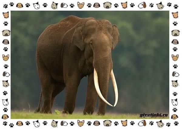 Виды-слонов-их-особенности-образ-жизни-и-среда-обитания-11-1