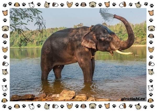 Виды-слонов-их-особенности-образ-жизни-и-среда-обитания-16-1