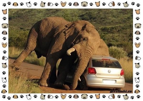 Виды-слонов-их-особенности-образ-жизни-и-среда-обитания-5-1