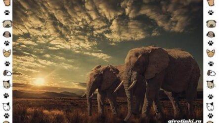 Виды слонов, их особенности, образ жизни и среда обитания