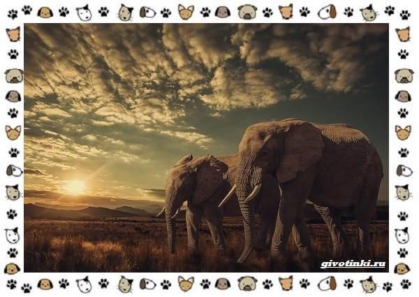 Виды-слонов-их-особенности-образ-жизни-и-среда-обитания-17-1
