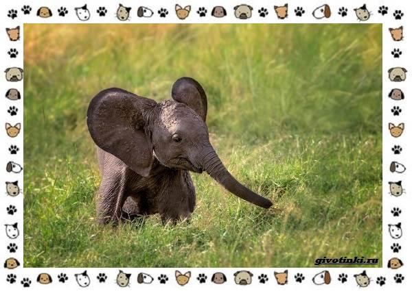 Виды-слонов-их-особенности-образ-жизни-и-среда-обитания-19-1