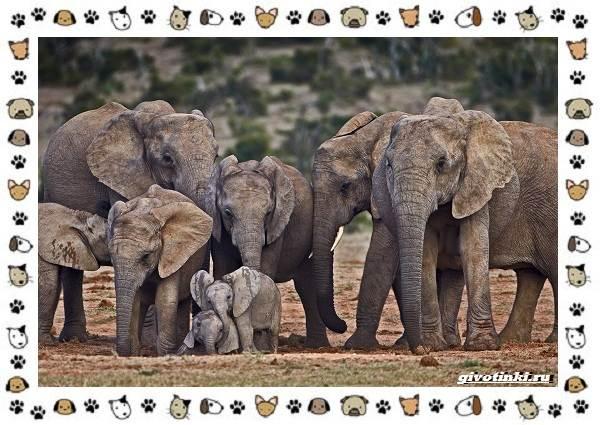 Виды-слонов-их-особенности-образ-жизни-и-среда-обитания-21