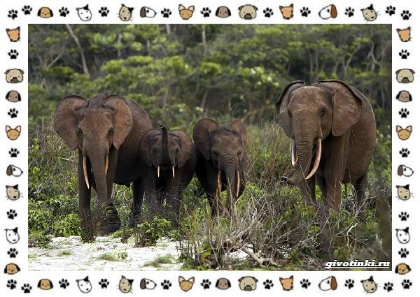 Виды-слонов-их-особенности-образ-жизни-и-среда-обитания-22