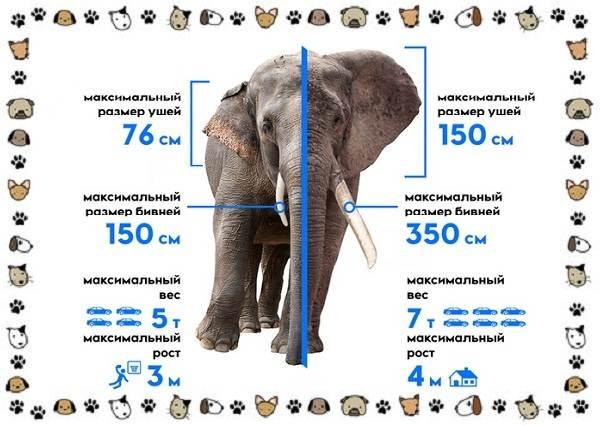 Виды-слонов-их-особенности-образ-жизни-и-среда-обитания-23