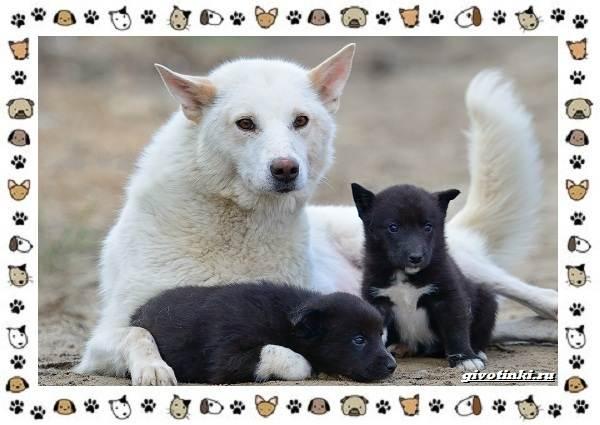 Породы-охотничьих-собак-3
