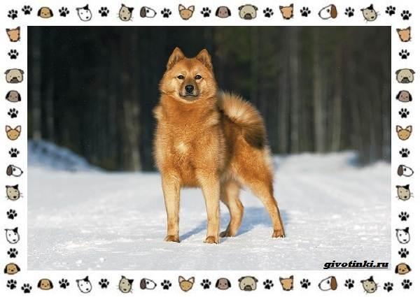 Породы-охотничьих-собак-4