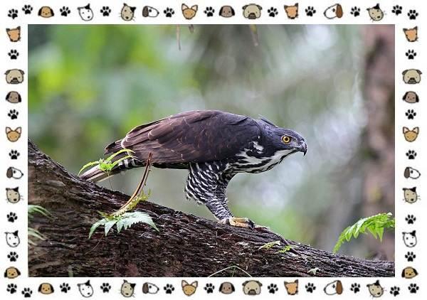 Виды-орлов-Описание-особенности-и-ареал-обитания-12