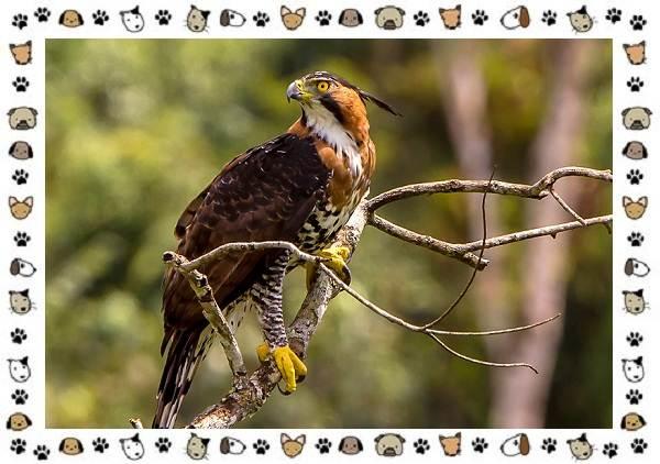 Виды-орлов-Описание-особенности-и-ареал-обитания-13