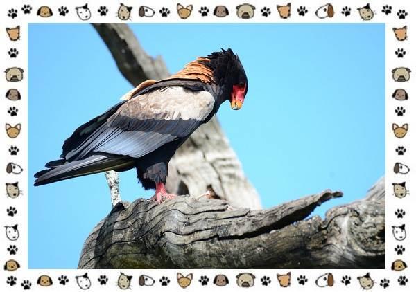 Виды-орлов-Описание-особенности-и-ареал-обитания-14