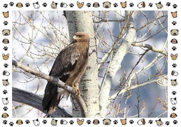Виды-орлов-Описание-особенности-и-ареал-обитания-5