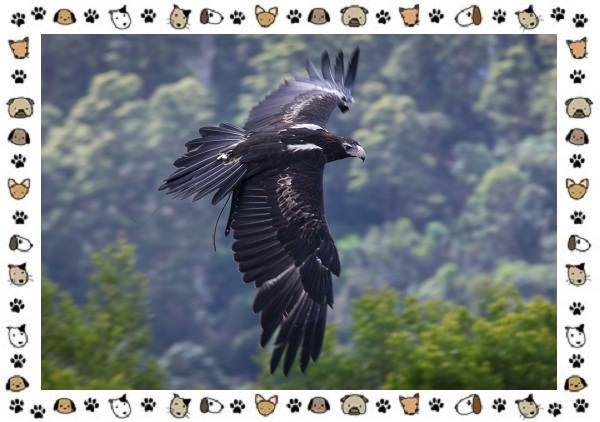 Виды-орлов-Описание-особенности-и-ареал-обитания-7
