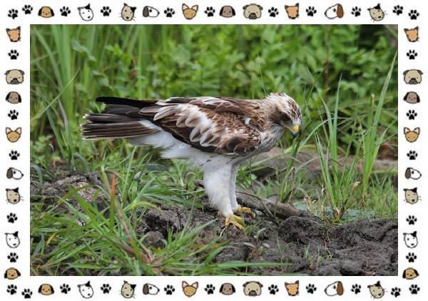 Виды-орлов-Описание-особенности-и-ареал-обитания-8