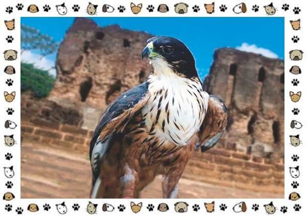 Виды-орлов-Описание-особенности-и-ареал-обитания-9