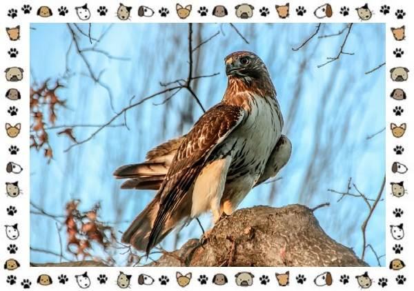 Виды-орлов-Описание-особенности-и-ареал-обитания