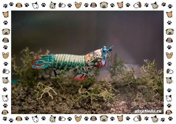 Необычные-животные-мира-и-их-особенности-1