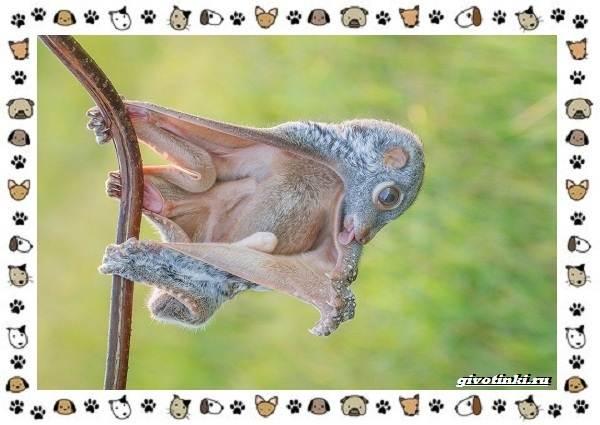 Необычные-животные-мира-и-их-особенности-11