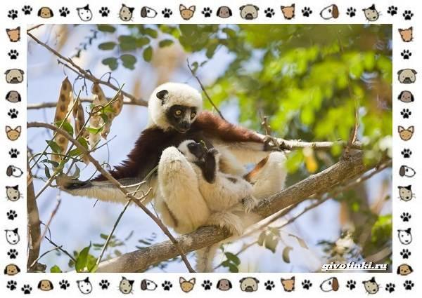 Необычные-животные-мира-и-их-особенности-16