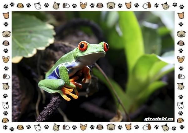 Необычные-животные-мира-и-их-особенности-3
