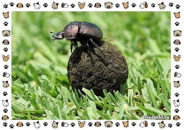 Необычные-животные-мира-и-их-особенности-4