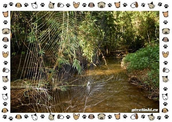 Необычные-животные-мира-и-их-особенности-5