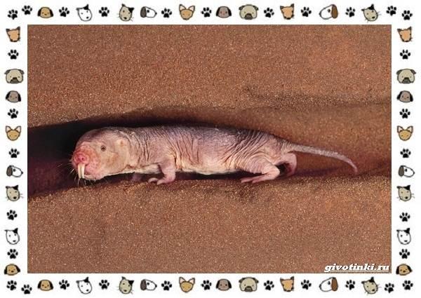 Необычные-животные-мира-и-их-особенности-8