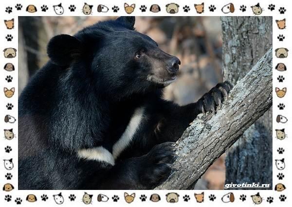 Виды-медведей-происхождение-распространение-поведение-13
