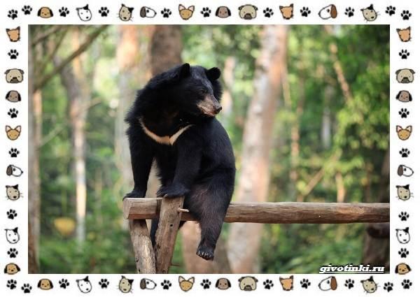 Виды-медведей-происхождение-распространение-поведение-14