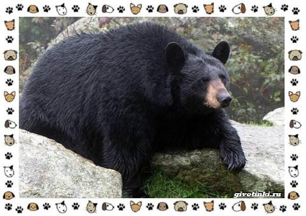 Виды-медведей-происхождение-распространение-поведение-18
