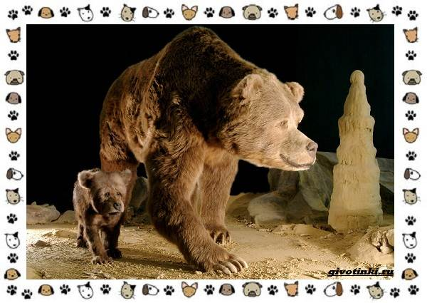 Виды-медведей-происхождение-распространение-поведение-2