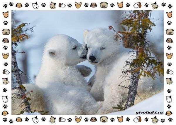 Виды-медведей-происхождение-распространение-поведение-20