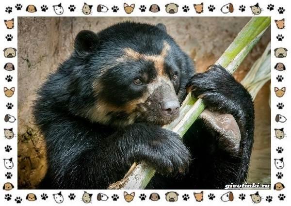 Виды-медведей-происхождение-распространение-поведение-22