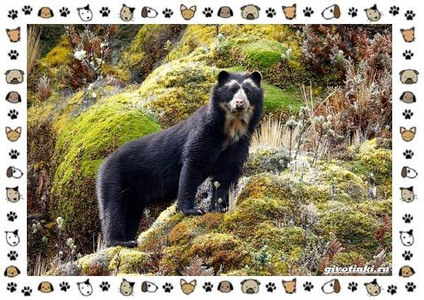 Виды-медведей-происхождение-распространение-поведение-23