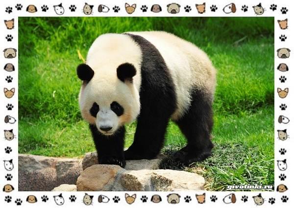Виды-медведей-происхождение-распространение-поведение-28