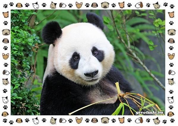 Виды-медведей-происхождение-распространение-поведение-29