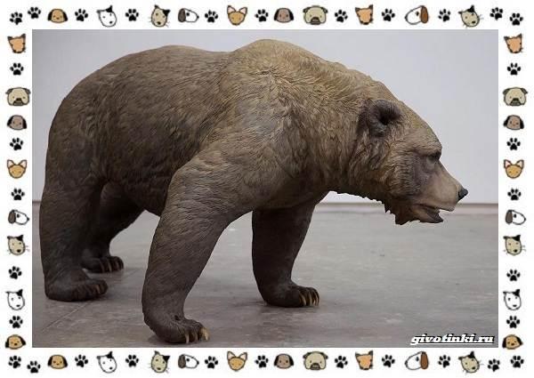 Виды-медведей-происхождение-распространение-поведение-3