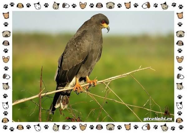 Виды-орлов-Описание-особенности-и-ареал-обитания-27