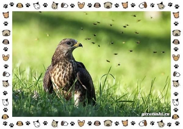 Виды-орлов-Описание-особенности-и-ареал-обитания-28
