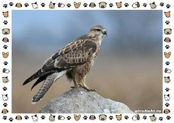 Виды-орлов-Описание-особенности-и-ареал-обитания-32