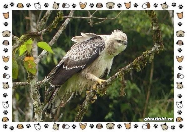 Виды-орлов-Описание-особенности-и-ареал-обитания-34